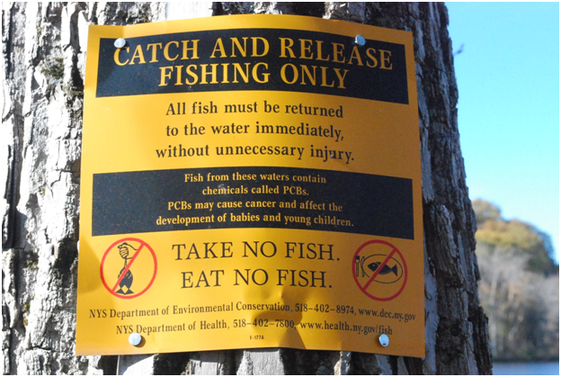 No Fishing 1